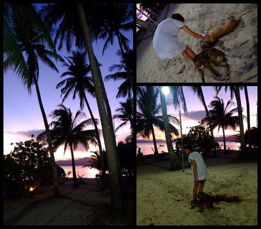 Flower Island Resort : La plage
