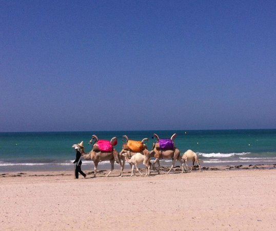 Hotel Al Jazira Beach & Spa : La plage de l'hotel