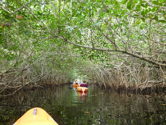 Tour The Glades - Private Wildlife Tours: Memories, 6/22/14