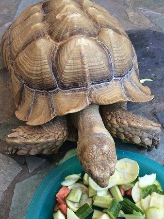 Aquaworld Aquarium & Reptile Rescue Centre : Tortoise