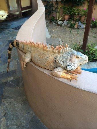 Aquaworld Aquarium & Reptile Rescue Centre : Iguana