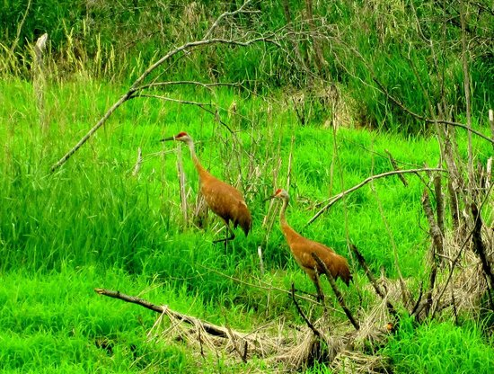 Reedsburg (WI) United States  city images : ... cranes Picture of Wisconsin 400 State Trail, Reedsburg TripAdvisor