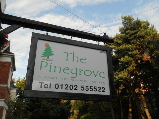 The Pinegrove!