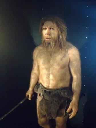 Museo de la Evolución Humana: Exposición