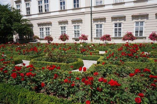Palais et jardins de Mirabell : РОЗЫ