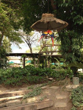 Hotel Museo Spa Casa Santo Domingo: parrots in the patio