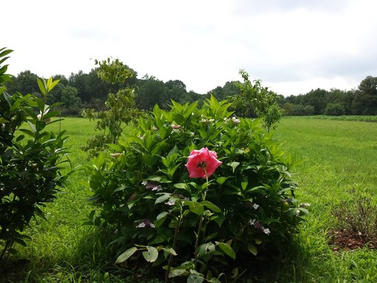Cascina Armonia: Dal giardino