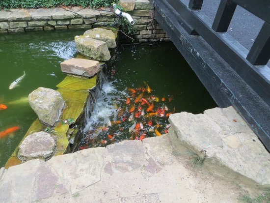 Hilton Anatole : Fish pond