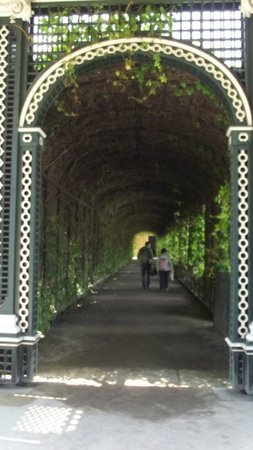 Schonbrunner Gardens: welcome shade of the beech tunnel