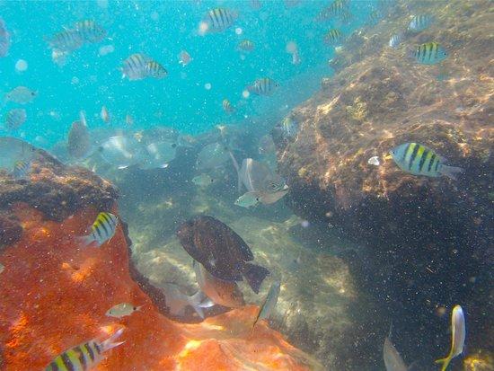 Red Reef Park : Reef 5