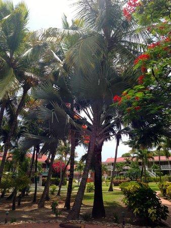 Pineapple Beach Club Antigua: Colorful foliage