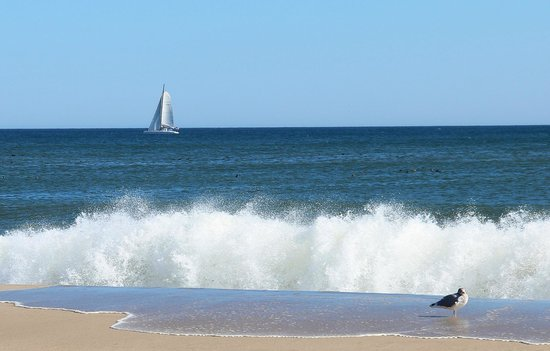 Nauset Beach: Sailboat and seagull passing by