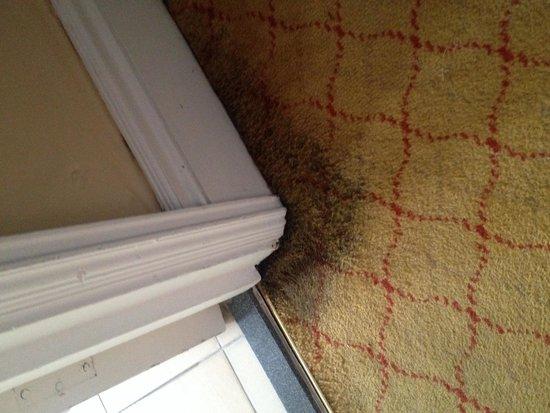 Hilton Brighton Metropole: Disgusting carpet