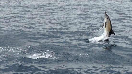 Cork Whale Watch: Putting on a show!