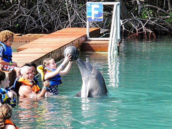 Dolphin Discovery Tortola: My neice interacting with the dolphins