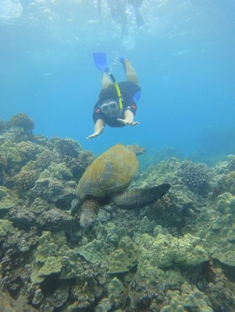Hyatt Regency Maui Resort and Spa: Turtles everywhere!