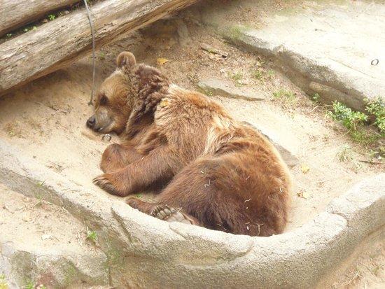 Zoo de Barcelona: Bear