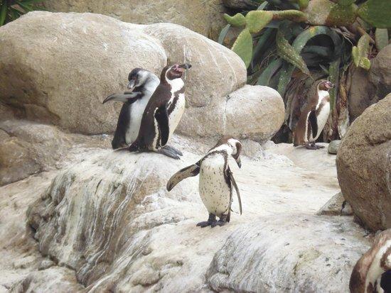 Zoo de Barcelona: Penguins