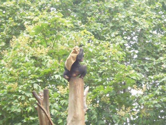 Zoo de Barcelona: Chimpanzee