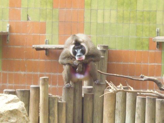 Zoo de Barcelona: Mandarin