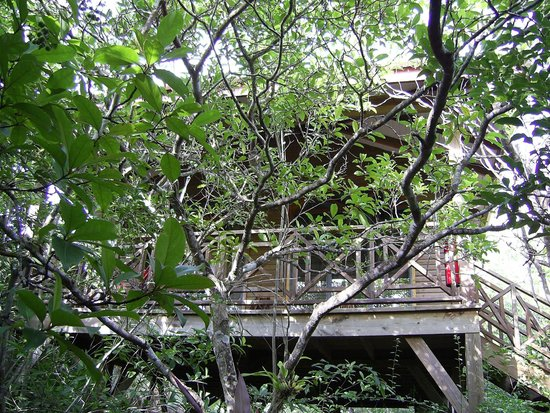 Hamanasi Adventure and Dive Resort: Our secluded treehouse.