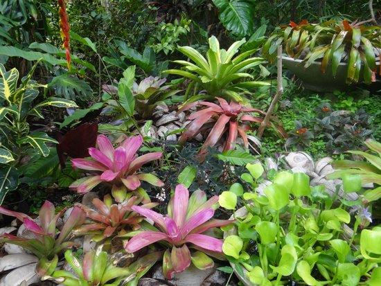 Hunte's Gardens: Bromeliads