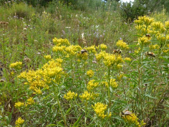 Sylvan Lake State Park Campground : The flowers