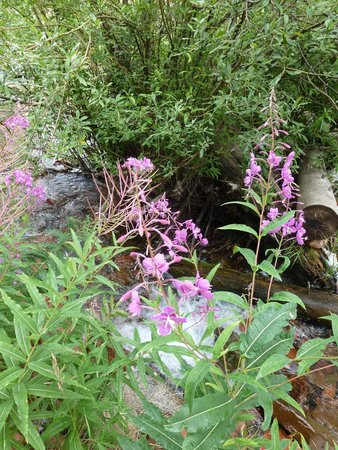 Sylvan Lake State Park Campground: The flowers