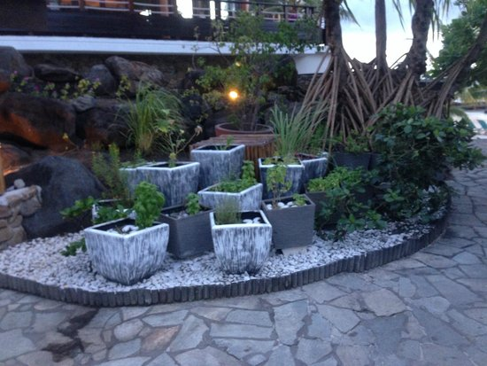 Hilton Moorea Lagoon Resort & Spa : fresh herbs by the pool bar