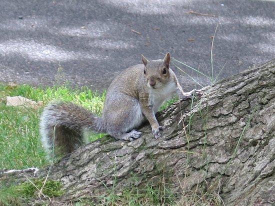 Abbey Wood Caravan Club Site: Squirrel