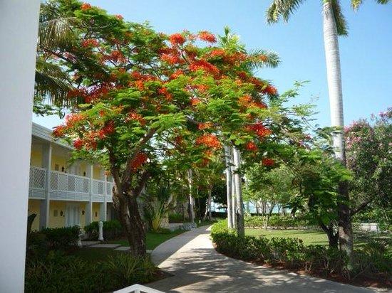 Grand Lucayan, Bahamas: Grounds