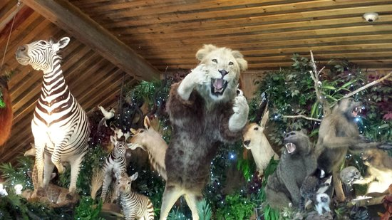 Clark's Fish Camp: Taxidermy provided by the zoo