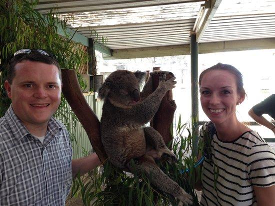 Blue Diamond Tours - Blue Mountains Day Tour: Cuddling a Koala at Featherdale