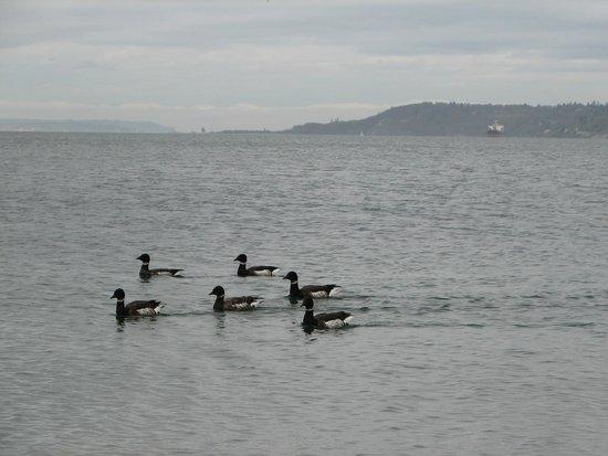 Alki Beach : Birds!