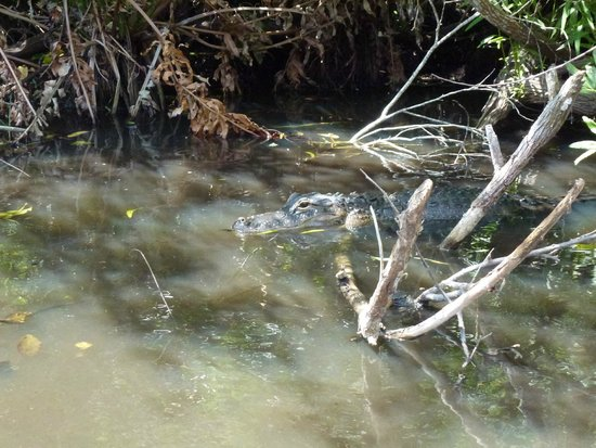 Gator Park: El pantano.