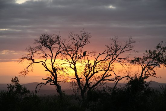 Mkuze Falls Lodge: vulture at sunrise