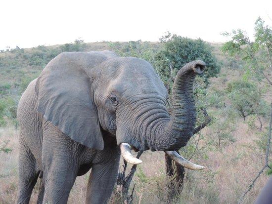 Mkuze Falls Lodge : that's an elephant