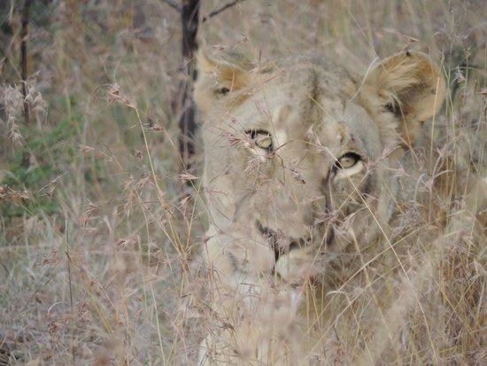 Mkuze Falls Lodge : here kitty...