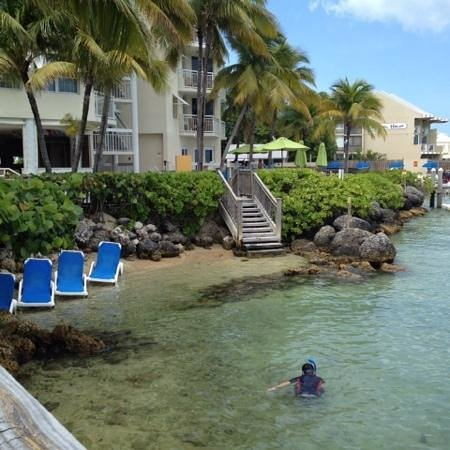 Hyatt Centric Key West Resort and Spa : snorkeling by the hotel