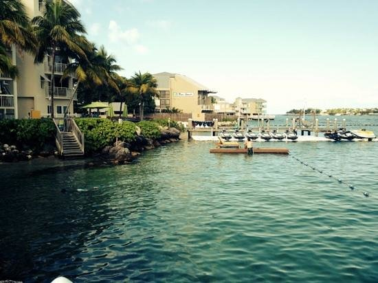 Hyatt Key West Resort and Spa: snorkeling by the hotel