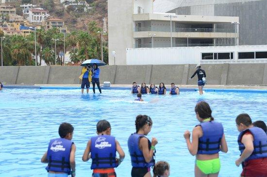 Cabo Adventures: Dolphin Swim at Cabo San Lucas facility
