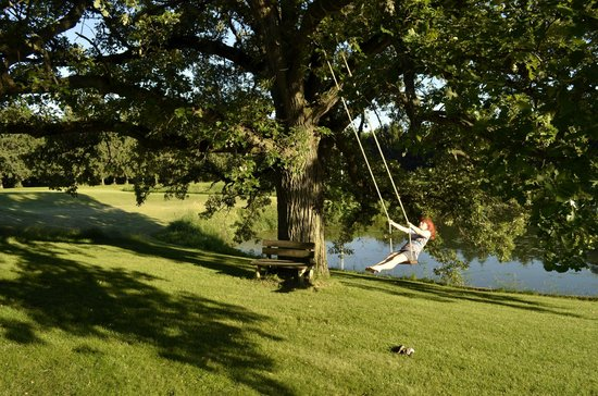 Pinehaven Bed and Breakfast: Swing!