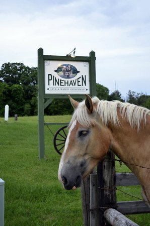 Pinehaven Bed and Breakfast: The horses welcome you