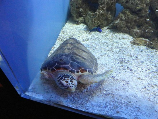 Moody Gardens : Injured turtle has a great habitat in order to recover.