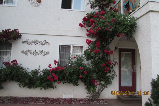 Sandy Beach Motel: Beautiful roses and grounds