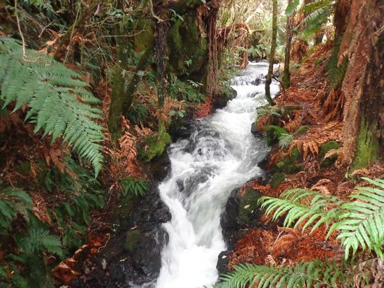 Buried Village of Te Wairoa: The waterfall trail is spectacular