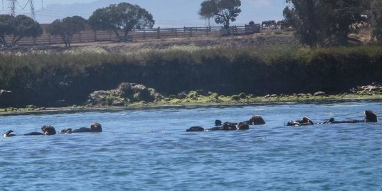 Kayak Connection: Sea otters
