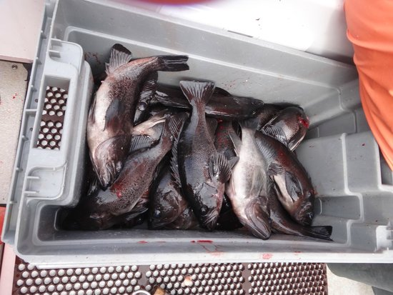 L & M Charters & Lodge: Black Rock Fish limits
