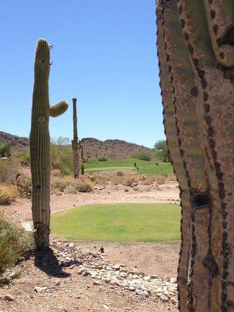 Gold Canyon Resort - Dinosaur Mountain Golf Course: Par 3 view from between the saguaros