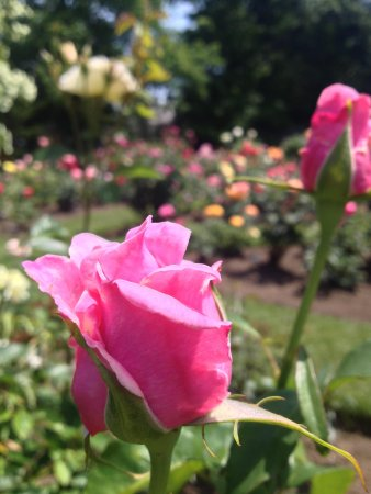 Fuller Gardens : So fragrant !